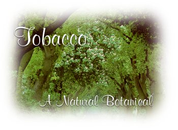 Tobacco Winter/Spring RYO Magazine Tobacco Reviews